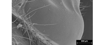 Oeil de mouche au MEB